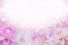 在软的葡萄酒口气的桃红色和白色大丽花花框架背景与闪烁光和bokeh,文本的拷贝空间 库存图片