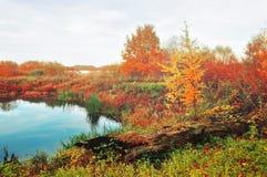 在软的葡萄酒颜色的有雾的秋天风景-蓝色河长满与在有雾的天气的芦苇 免版税库存照片