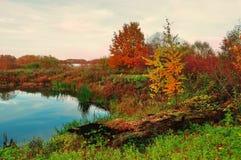 在软的葡萄酒颜色的神奇秋天风景-蓝色河长满与在多云天气的芦苇 免版税库存图片