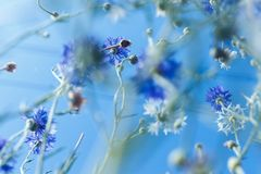 在软的颜色和迷离样式的五颜六色的花背景的 库存照片