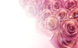 在软的颜色和迷离样式的浅粉红色的玫瑰背景的 背景看板卡问候页模板通用万维网婚礼 美好的背景 库存图片