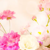 在软的颜色和迷离样式的甜颜色玫瑰 库存照片