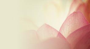 在软的颜色和迷离样式的甜颜色莲花在桑树裱糊纹理 免版税库存图片