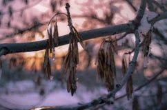 在软的颜色的冬天水彩 库存图片