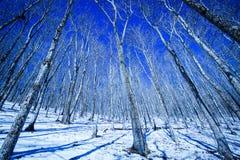 在软羊皮的冬天 库存图片