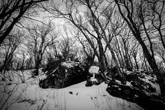 在软羊皮的冬天 图库摄影