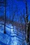 在软羊皮的冬天 库存照片