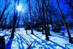 在软羊皮的冬天 免版税库存照片