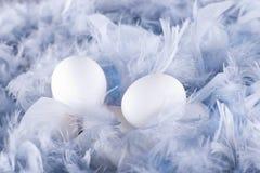 在软,柔和的蓝色羽毛的白鸡蛋 免版税库存图片
