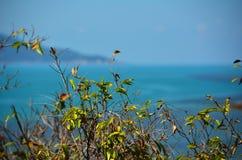 在轰隆机架海滩的Seaview,苏梅岛海岛 库存照片