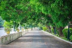 在轰隆Pa的树隧道 免版税图库摄影