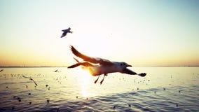 在轰隆Poo的海鸥 免版税库存图片
