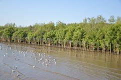 在轰隆Pu海滩的海鸥鸟 免版税库存图片