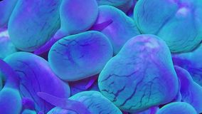 在轻的潮流的蓝色和绿色泡影珊瑚 股票视频