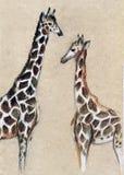 在轻的背景的两头长颈鹿 在纸板,色的铅笔的图画 库存图片