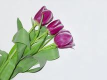 在轻的背景的郁金香花 库存照片