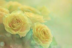 在轻的背景的黄色玫瑰 免版税库存照片