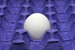 在载纸盘的唯一鸡鸡蛋 库存图片