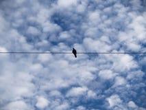 在输电线中间的鸠在云彩 库存照片