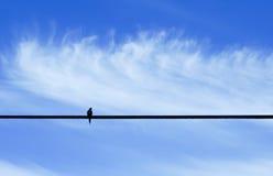 在输电线的一只鸟 免版税库存图片