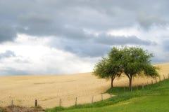 在边界的结构树 库存图片