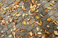 在边路的下落的叶子 免版税库存图片