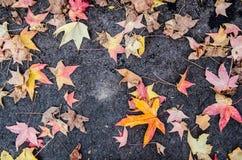 在边路的下落的叶子 免版税库存照片