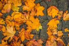 在边路的五颜六色的叶子 库存图片