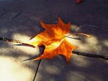 在边路的唯一枫叶在秋天 免版税图库摄影