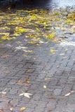在边路的湿黄色叶子在雨以后 免版税库存照片