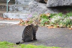 在边路的猫 库存图片