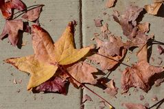 在边路的秋天叶子 免版税库存照片
