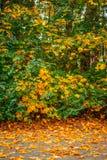 在边路的秋天槭树 免版税库存图片