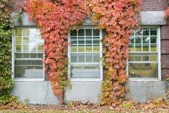在达特茅斯学院校园里的常春藤覆盖的大厦在汉诺威,新罕布什尔 库存图片