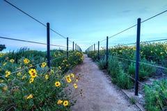 在达讷论点市视图上的供徒步旅行的小道在日落 免版税库存照片