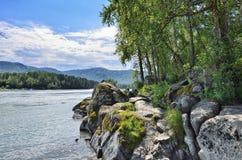 在迅速西伯利亚河Katun岩石河岸的夏天风景  图库摄影