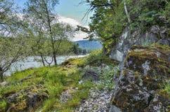 在迅速西伯利亚河Katun岩石河岸的夏天风景  免版税库存图片