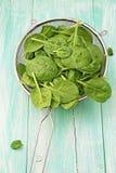 在过滤器的菠菜叶子 免版税库存照片