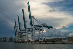 在迈阿密口岸的运输起重机 库存图片