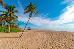 在迈阿密海滩在一好日子,迈阿密,佛罗里达,美国的棕榈 库存照片