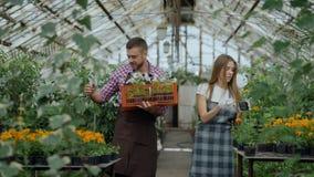 在运作自温室的围裙的年轻有吸引力的卖花人夫妇 有箱的谈快乐的人花妇女松懈 影视素材