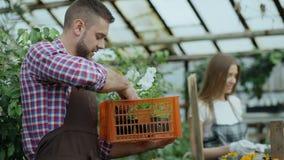 在运作自温室的围裙的年轻有吸引力的卖花人夫妇 有箱的谈快乐的人花妇女松懈 股票视频