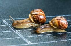在运动轨道的蜗牛 免版税库存图片
