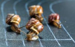在运动轨道的蜗牛 库存照片