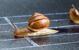 在运动轨道的蜗牛 图库摄影