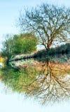 在运河的树反射,被倒置 库存图片