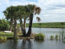 在运河的棕榈树 库存照片
