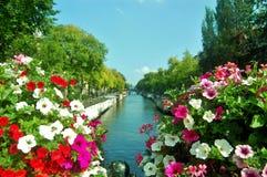 在运河的花在阿姆斯特丹 库存照片