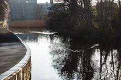 在运河的鸭子 免版税库存图片
