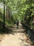 在运河途中的骑自行车的人 免版税图库摄影